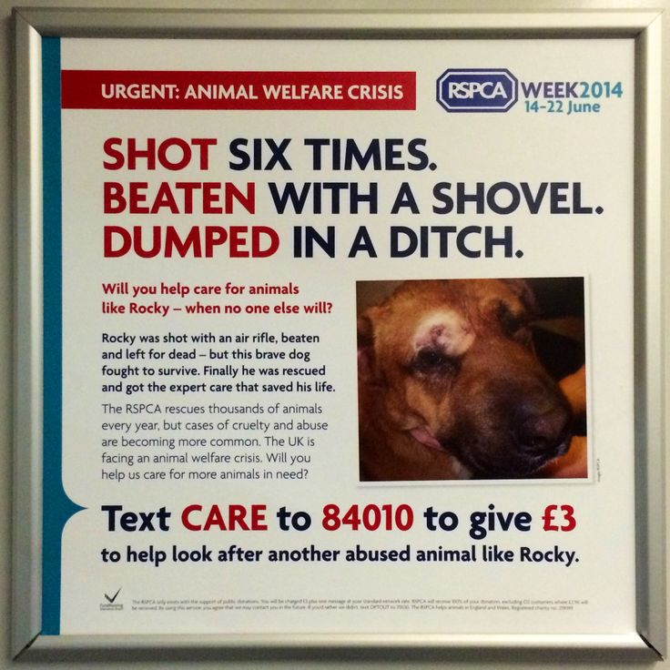 Here's an appeal from a charity with a household name - the RSPCA. This is a straight 'classic' ask to text £3 to support their work. The ad features the harrowing tale of an abused dog called Rocky, whom the charity rescued. #charity #train #advert #rspca