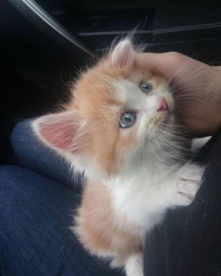 When a kitty chooses you.. <3 **MORE ON ►◄ **