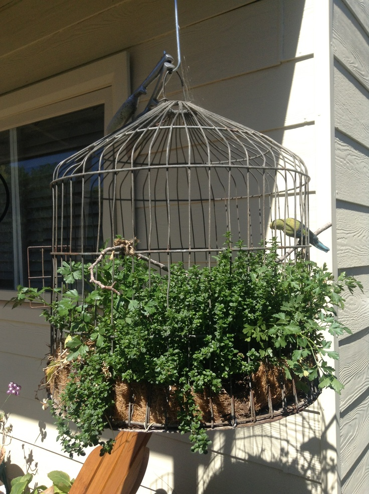 Use Your Herbs More By Hanging Them On Your Back Patio In An Old Bird Cage