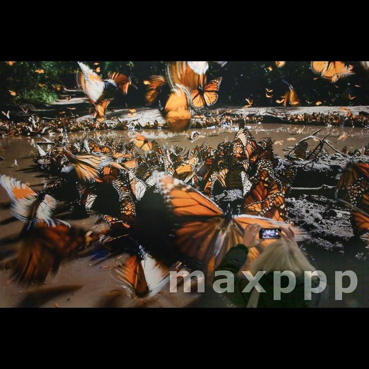 Unique A visitor takes a picture of the work uDie wundersame Reise der Monarchfalter u lit The curious journey of the Monarch butterfly by Axel Gomille at the