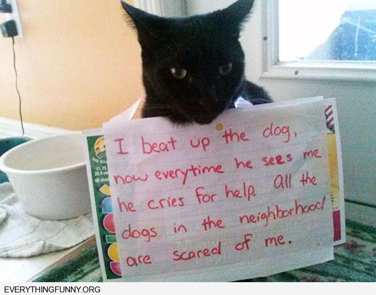 funny cat shaming i beat up the dog now everytime he sees ... Funny Scared Dog Face