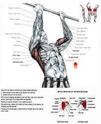 10 best Anatomi images on Pinterest | Workouts, Human body and ...