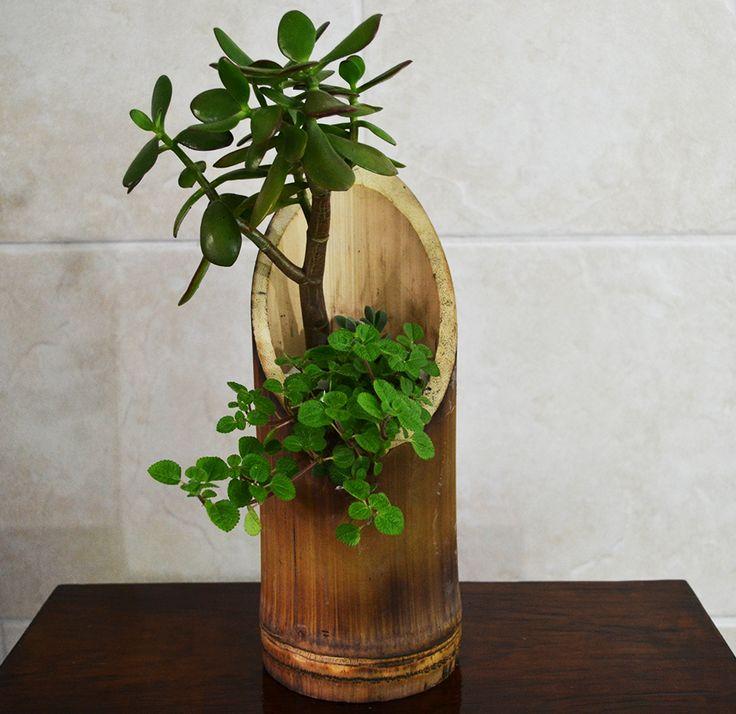 Resultado de imagen de suculentas en bambu