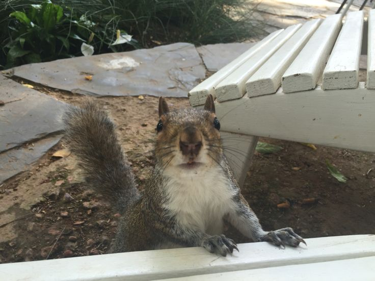 #Squirrel in Companys Garden, #CapeTown, South Africa
