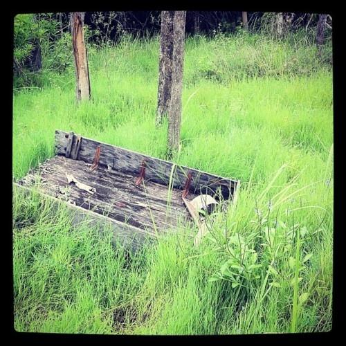 Near Heritage Tea Rooms, Harveys Range, Townsville. On Instagram