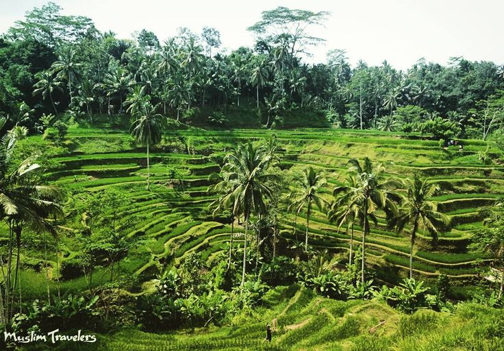 the subak bali's irrigation system cultural A key to the balinese psyche is the subak system of rice-field irrigation through collaborative arrangements, water that starts high in the.