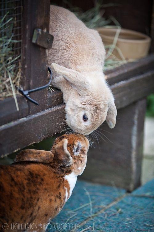.Bunny love <3 <3 <3