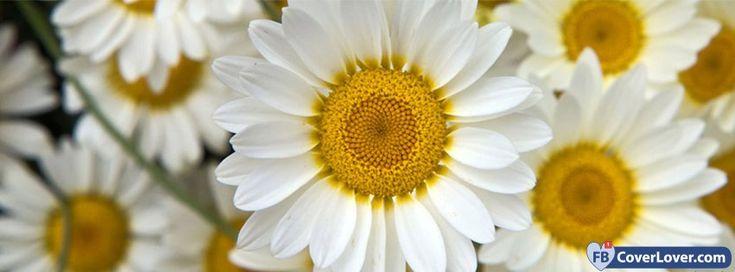 Daisies Close Up - cover photos for Facebook - Facebook cover photos - Facebook cover photo - cool images for Facebook profile - Facebook Covers - FBcoverlover.com/maker