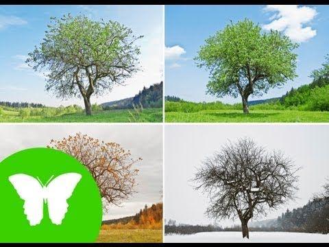 http://www.pinterest.com/mariluislgf/ciencias-de-la-naturaleza-ciencias-sociales/  ▶ La Eduteca - El movimiento de traslación - YouTube