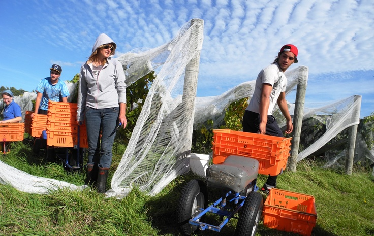 The winning photo from Schubert Wines in Martinborough, NZ.