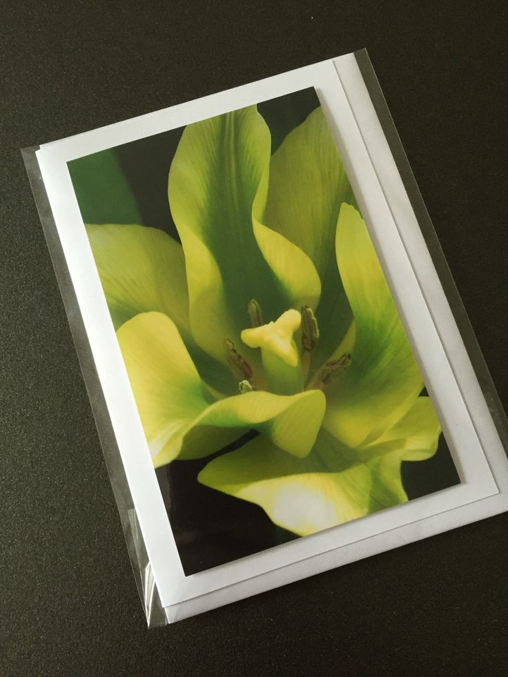 Made with ❤️ : Greeting card cheerful yellow Tulip https://www.etsy.com/listing/386402262/greeting-card-cheerful-yellow-tulip?utm_campaign=crowdfire&utm_content=crowdfire&utm_medium=social&utm_source=pinterest