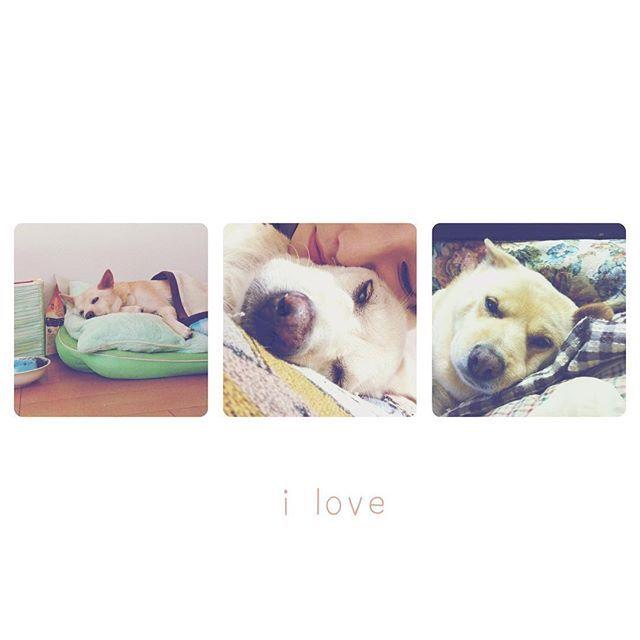 ʚ❤︎ɞ あ〜ほんと可愛い♡特に右のルル🐶 何かあると自然にルルのとこに脚が向かっちゃう! なんか力を貰える気がして(*˙˘˙*) ずっと家族💞来週お墓参り行くからね! . #love #petsagram #pet🐶 #dogstagram #犬 #家族 #愛犬 #まだ三年 #ずっと ✨ #癒し #思い出 #初めてのペット #instagood . 0224