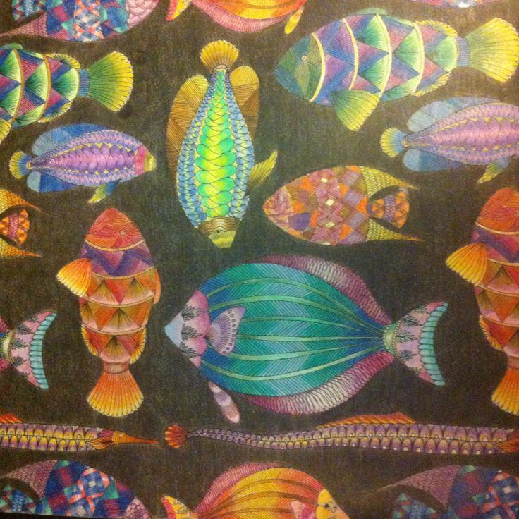 Adultcoloringbook Animalkingdom Milliemarotta Adult ColoringColoring BooksPencil