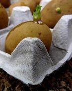 Fiche très pratique pour la culture de pommes de terre sur balcon ou hors sol.