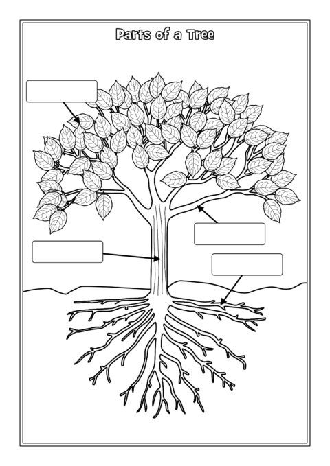 Parts of a Tree Labelling Worksheets (SB12381