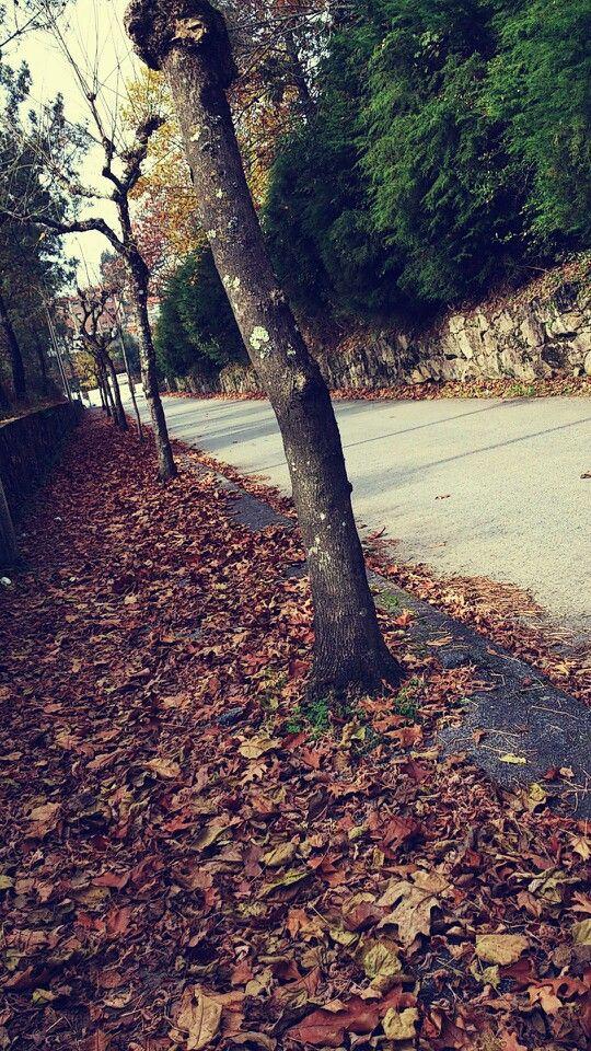 Passeio forrado de folhas caídas