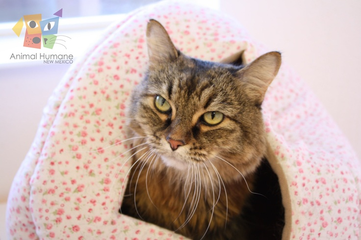 Meowskie is a beautiful little lady available for adoption today! I'm a VERY sweet lady who will be very content to snuggle on your lap while you pet me. I'll be a good companion for you on these cold winter nights.