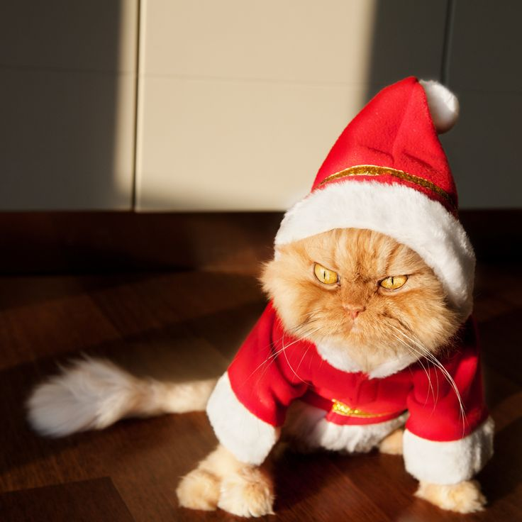 Best Garfi The Angriest Cat In The WORLD Images On Pinterest - Garfi is officially the worlds angriest cat