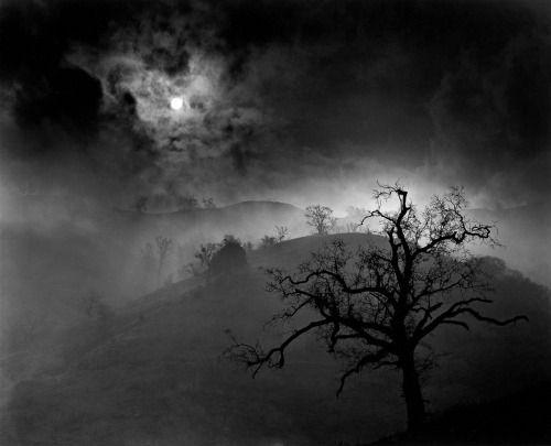 Stark Tree, 1956 by Wynn Bullock