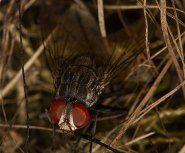 En las Galápagos, una amenaza insidiosa a los pinzones de Darwin
