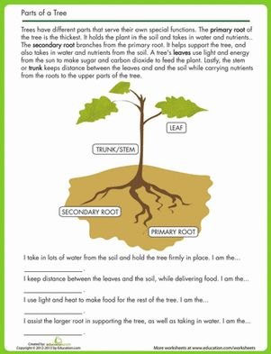 22 best tree science for kids images on pinterest a tree life science and science ideas. Black Bedroom Furniture Sets. Home Design Ideas