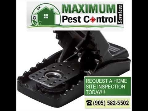 Pest Control Service Hamilton Ontario ift.tt/1eIZPl4 (289) 396-5426 .Cockroach R