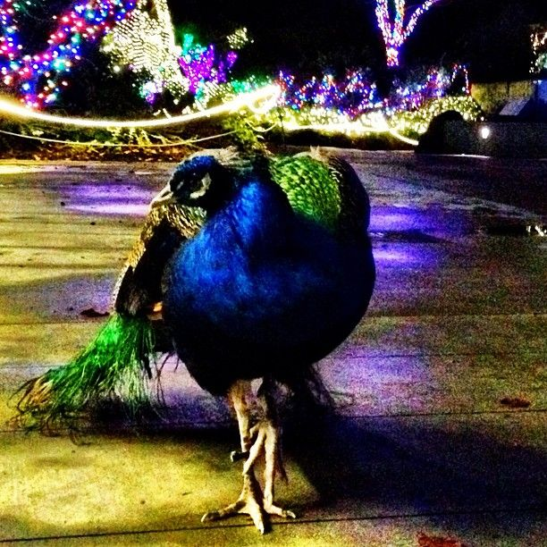 17 Best Images About Christmas 2013 On Pinterest Zoos