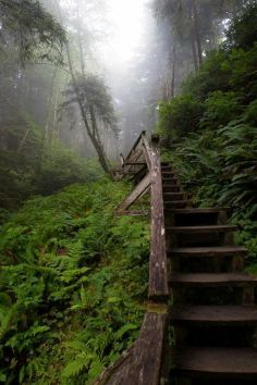 Pacific Rim Trail, Uclulet, BC, infinite stretches of undeveloped coastline,