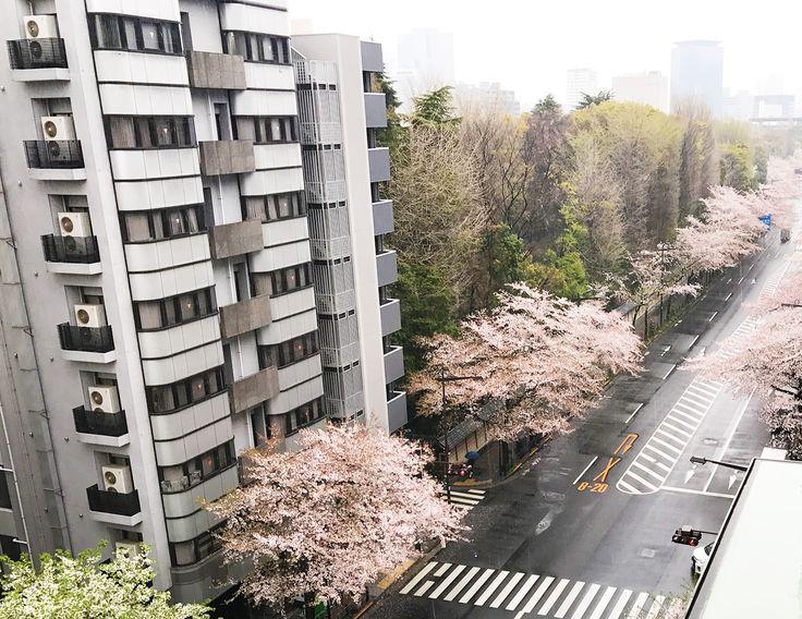 【編集者M】おはようございます。最近桜に関する投稿が多いけどなんでだろ~🤔と思う人もいるかと思います。実は当社、東京でも桜の名所である、九段にあるからなんです🌸🌸🌸(地図→https://www.cb21.co.jp/company/)当社からはこんな感じで桜が見えちゃいます✨