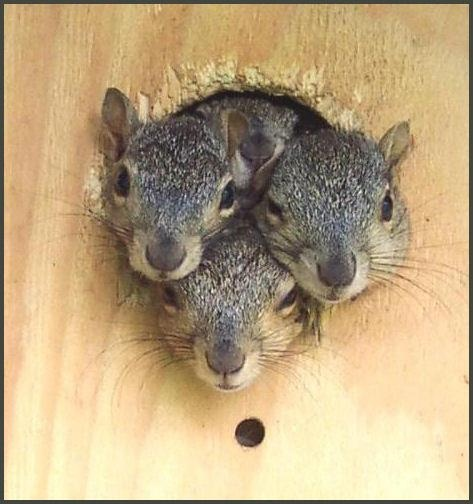 Nothing like a trio of little noses to make your day.... (well, it does mine).