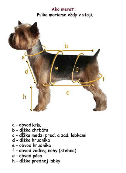 yorkie - how to measure