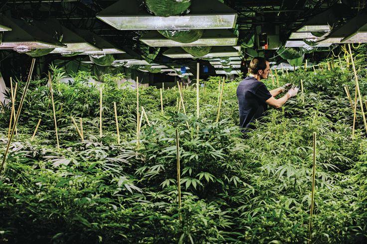 Industrial weed complex by Andrew-Hetherington