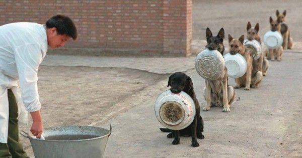 Todo un mundo habla de la foto de los perros policía esperando su comida.