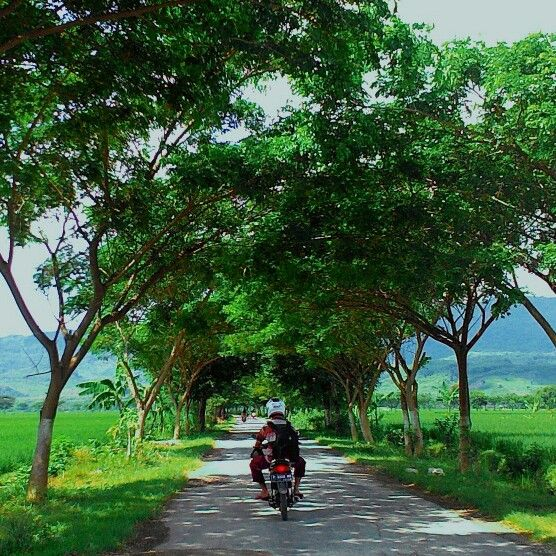 Country Road  Full frame version please go to  Info Muda Kita: Country Road yang Menawan http://infopemudapemudi.blogspot.com/2015/02/country-road-yang-menawan.html?spref=tw  #wuluhan #jember2015 #landscape #rural #jember #beautiful #indonesia #selatan #jawa #jawatimur #foto #fotografi #photo #photography #country #road