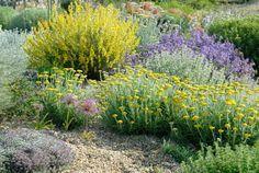 Guia de jardin. Blog de jardinería y plantas. Jardín en casa.: Plantas rústicas y resistentes a la sequía para un jardín sostenible