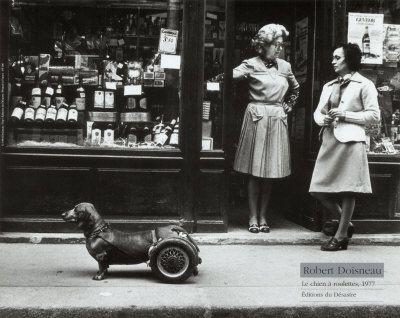 Dog on wheelsPhotos, Le Chien, Dachshund, Wheels, Weiner Dogs, Wiener Dogs, Robert Doisneau, Photography, Animal