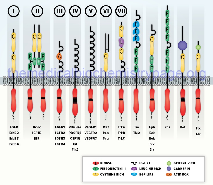 Mechanisms of Signal Transduction