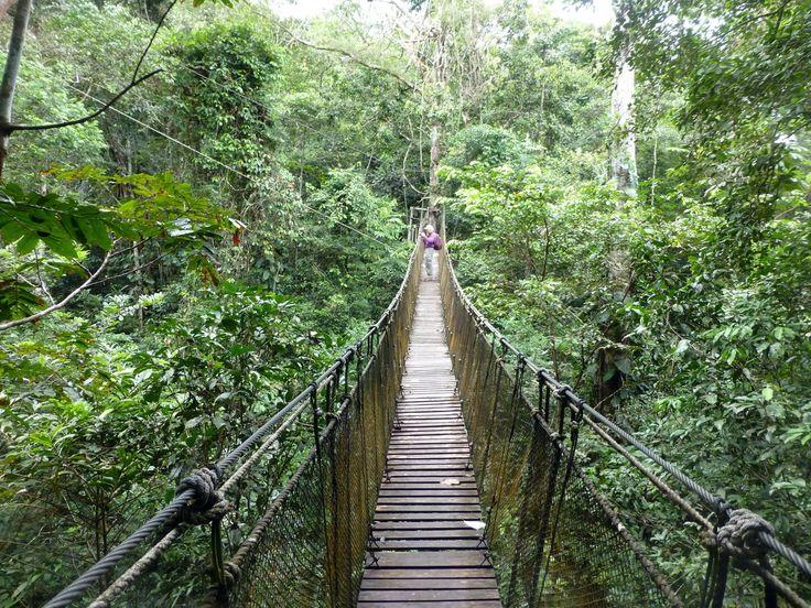 Hiking in the Amazon