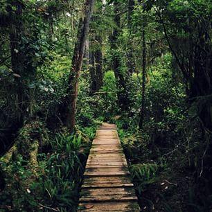 Rainforest Trail in Tofino on Vancouver Island. (Photo: @tomparkr via Instagram) #exploreBC #explorecanada