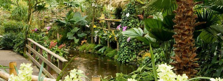 Amazone regenwoud - Orchideeënhoeve
