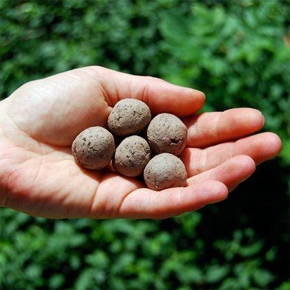 ZAADBOMMEN: Gooi ze op braakliggende stukken grond en maak zo de stad iets groener. (via www.tuinieren.nl)