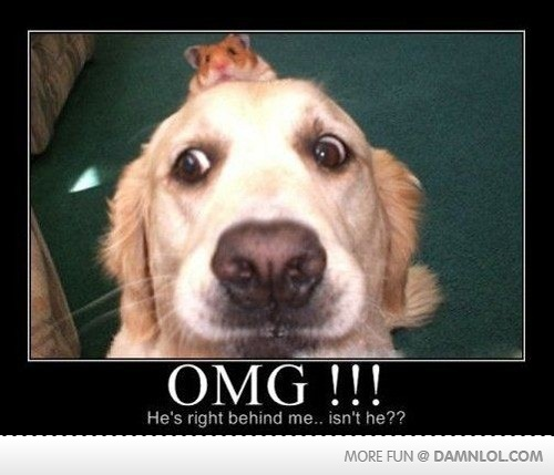lol: Funny Animals, Dogs, Pet, Funny Stuff, Funnies, Humor, Things