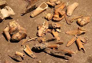 Restes d'ossements d'animaux. Salle Monique.Grotte de la Vache.Meyrals - Ariège. Midi-Pyrénées
