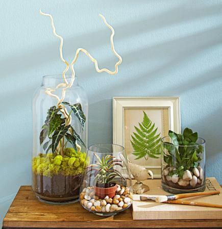 Unexpected containers turn inexpensive small houseplants into showstoppers. Click for details!