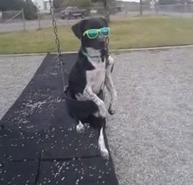 This dog who is dripping swag. | The 40 Greatest Dog GIFs Of All Time