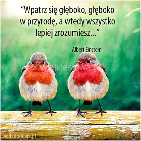 Wpatrz się głęboko, głęboko w przyrodę... #Einstein-Albert, #Przyroda-i-zwierzęta, #Zrozumienie