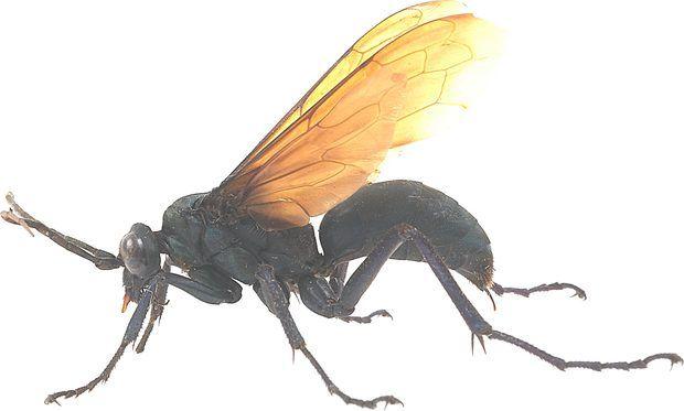 Tipos de insectos voladores que pican