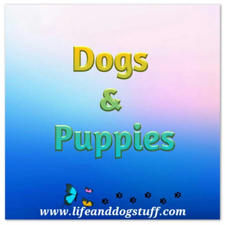 Pinterest board cover for dogs and puppies.