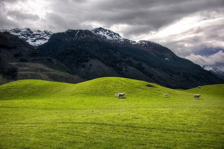 The soft rolling hills and sheep of Glenorchy. Photo by Trey Ratcliff
