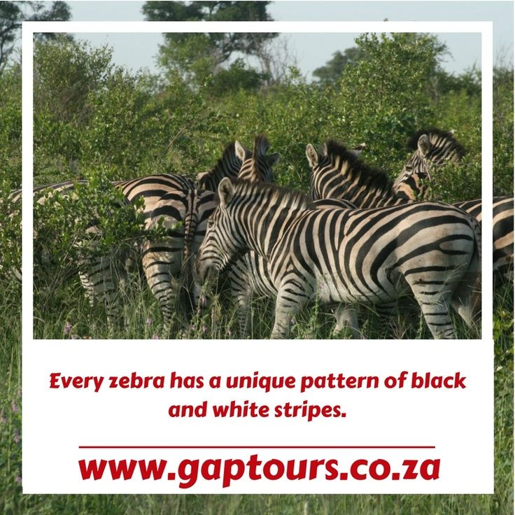 Amazing day in the Kruger National Park! Have you booked you seat yet? Contact our reservations office: info@gaptours.co.za www.gaptours.co.za